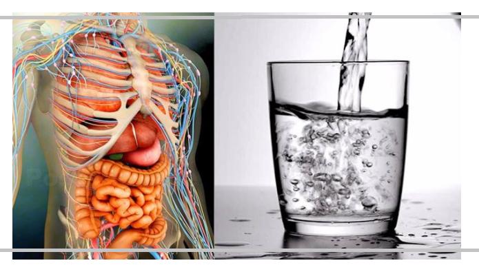 streit saure nieren